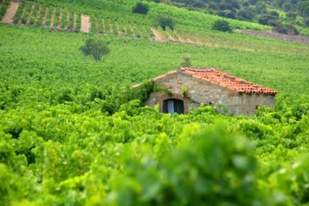 Vignobles Audois